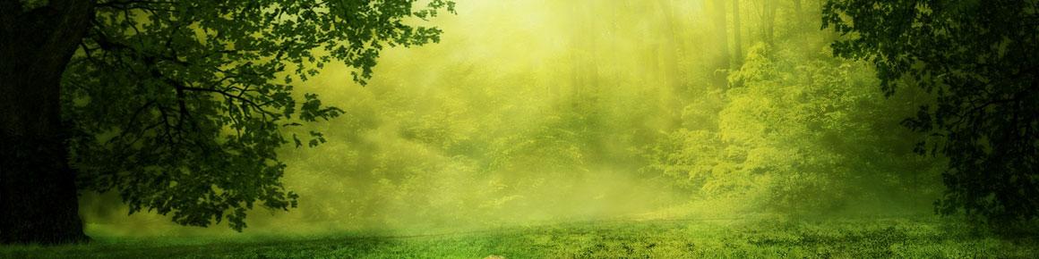 OHRpheus lite Umweltaktion Artikelbild Wald